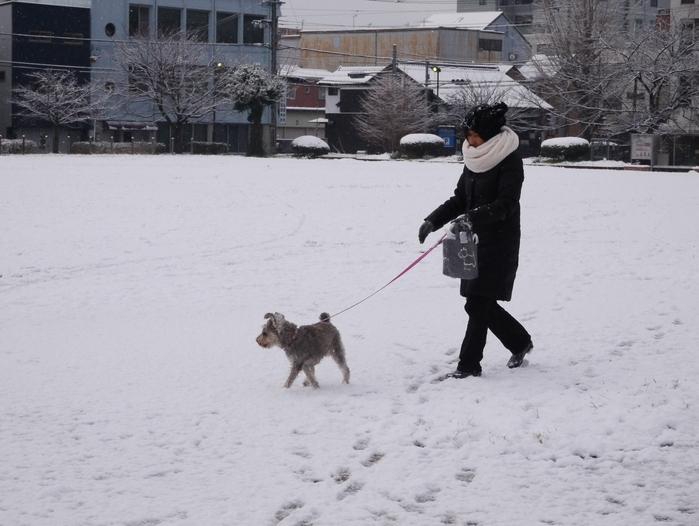 三年ぶりの雪便り (下)  _b0093754_22592263.jpg