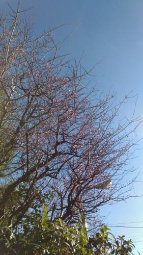 近づく春_c0201876_22343526.jpg