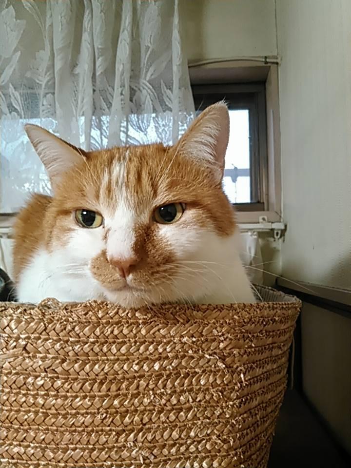 【猫】朝の顔_f0141609_20090406.jpg