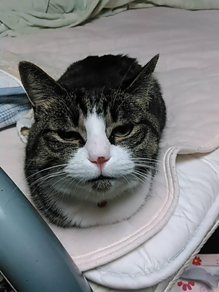 【猫】朝の顔_f0141609_20090660.jpg