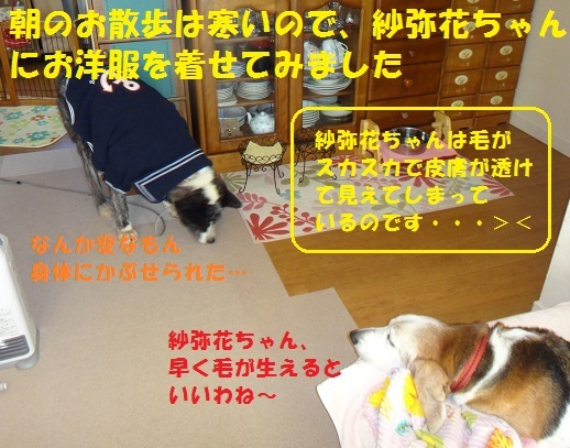 f0121712_08562721.jpg