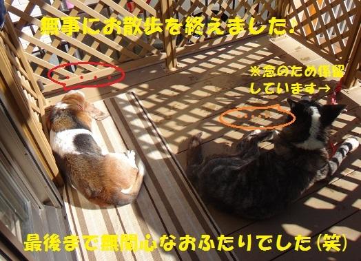 f0121712_09182715.jpg