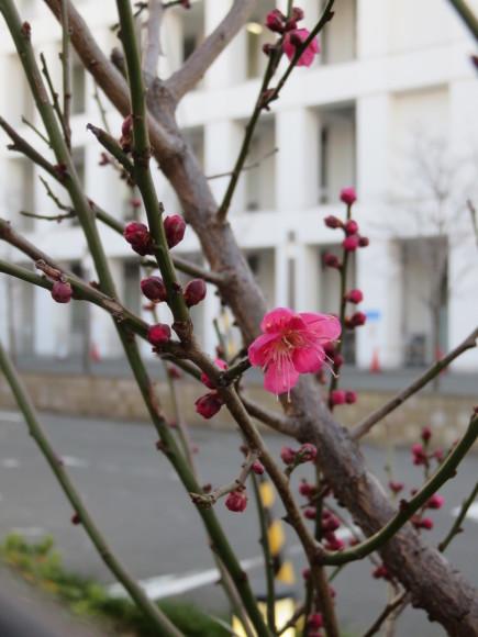 シチリアの太陽を感じてや。 って真冬にすすめてみる ♬_d0212522_09380093.jpg