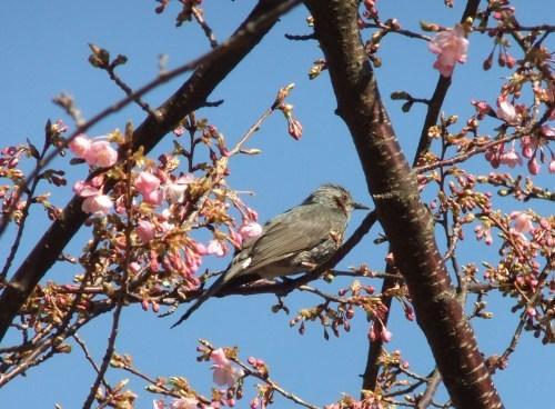 桜の花も咲いて..もうすぐ春です。_b0137932_16142608.jpg