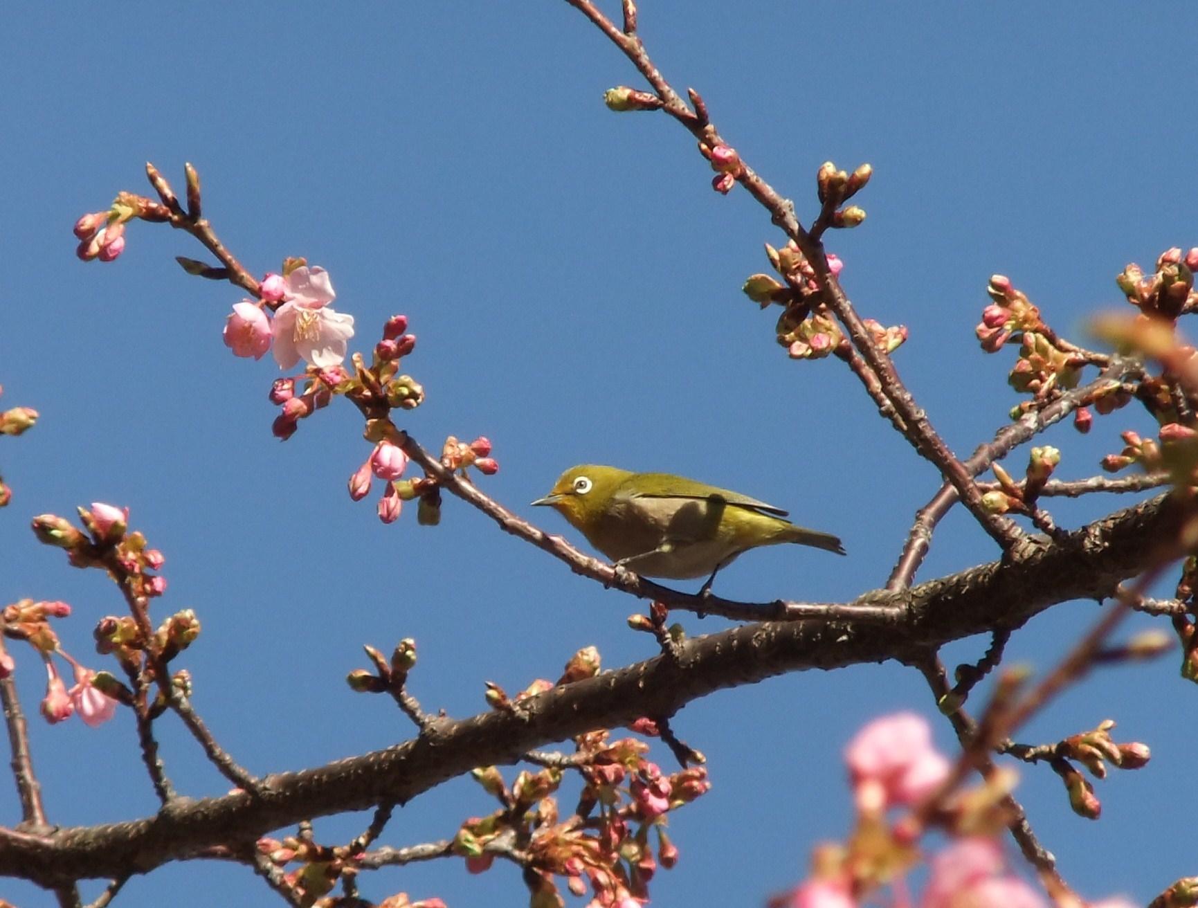 桜の花も咲いて..もうすぐ春です。_b0137932_16150371.jpg