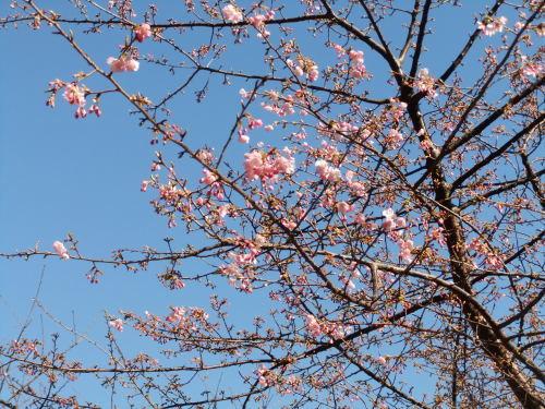 桜の花も咲いて..もうすぐ春です。_b0137932_17304519.jpg