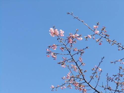 桜の花も咲いて..もうすぐ春です。_b0137932_17314544.jpg