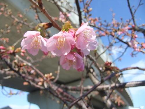 桜の花も咲いて..もうすぐ春です。_b0137932_20394373.jpg