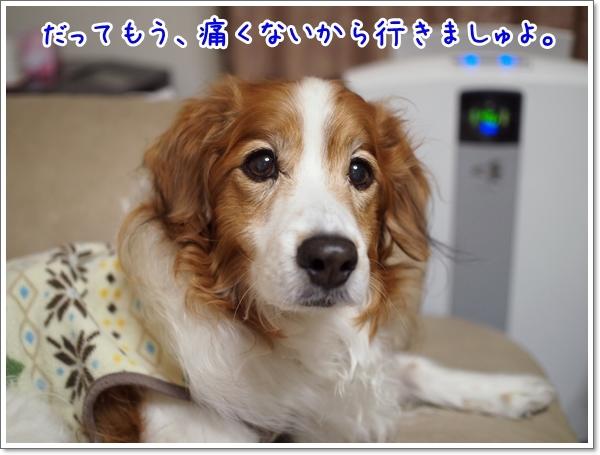d0013149_00124812.jpg