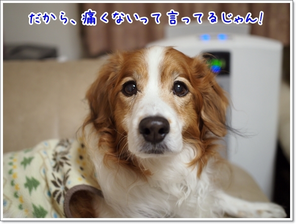 d0013149_00261263.jpg