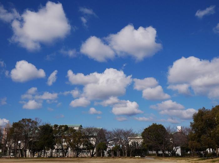 雪の日から一夜明けた公園 (1月25日)_b0093754_22281792.jpg