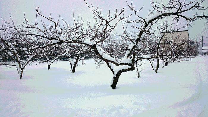 病院の検査の疲れを癒してくれた果樹園からのリンゴ_a0031363_0241994.jpg