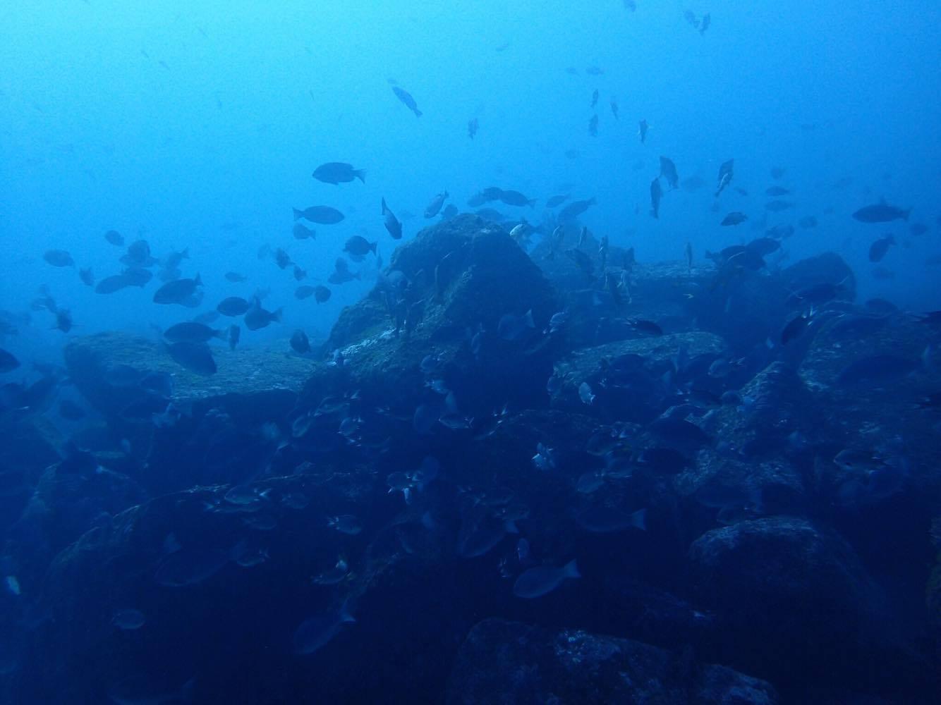1月26日 船の上から水底が!_f0151886_14541547.jpg
