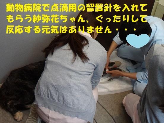 f0121712_14444882.jpg