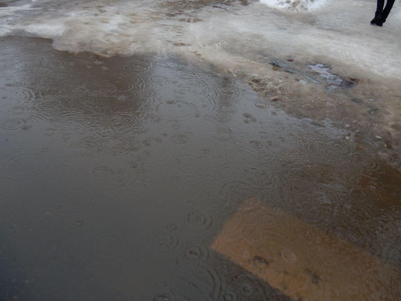 雨の北大_c0025115_20481441.jpg
