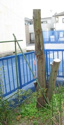 大寒の庭_f0129726_18321446.jpg