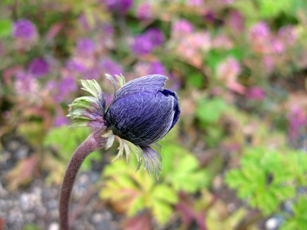 大寒の庭_f0129726_18381702.jpg