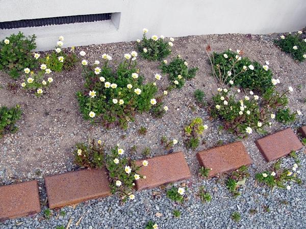 大寒の庭_f0129726_18481110.jpg