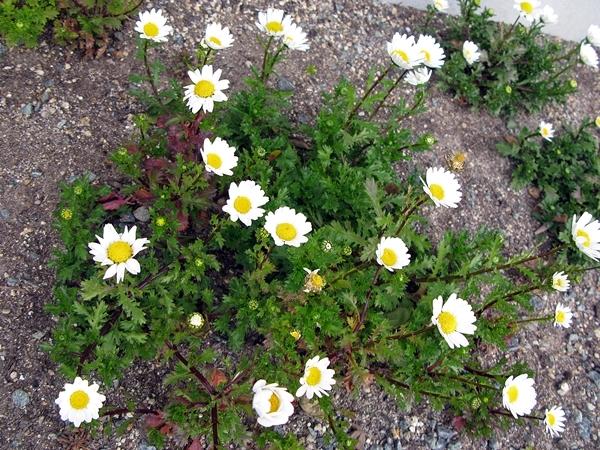 大寒の庭_f0129726_18502216.jpg