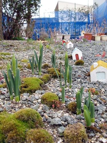 大寒の庭_f0129726_18524705.jpg