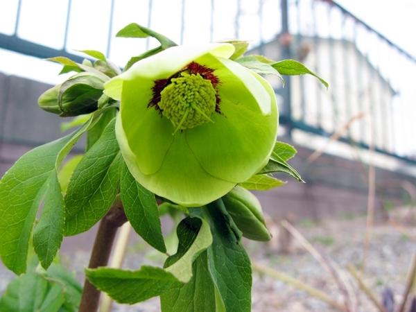 大寒の庭_f0129726_18535295.jpg