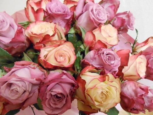 驚愕!芽キャベツの全身像。誕生日のバラに勝ってるわ〜。_a0095931_11190520.jpg