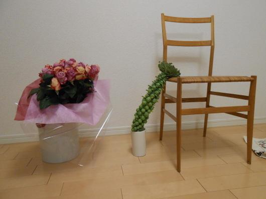 驚愕!芽キャベツの全身像。誕生日のバラに勝ってるわ〜。_a0095931_11193309.jpg
