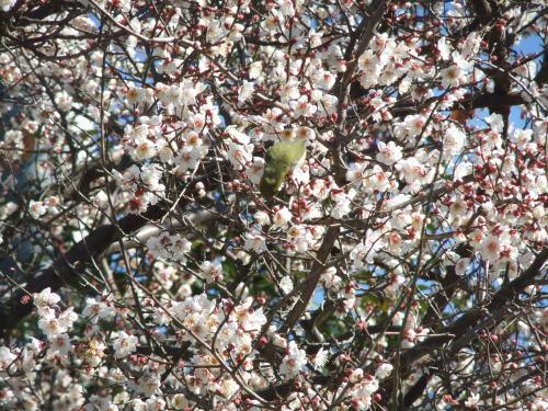 桜の花も咲いて..もうすぐ春です。_b0137932_11501824.jpg