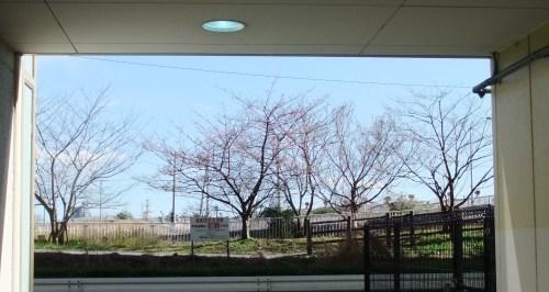 桜の花も咲いて..もうすぐ春です。_b0137932_11570505.jpg