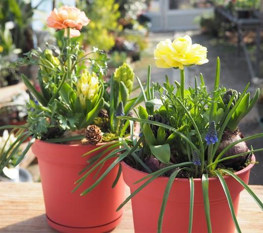 窓辺で春を先取り!_f0139333_20244919.jpg