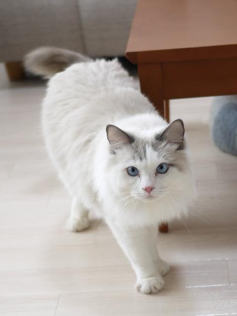 猫のお留守番 小石丸くん編。_a0143140_2020811.jpg