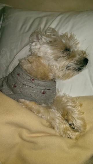 飼い主の枕はアミィの枕。_b0107163_00413939.jpg
