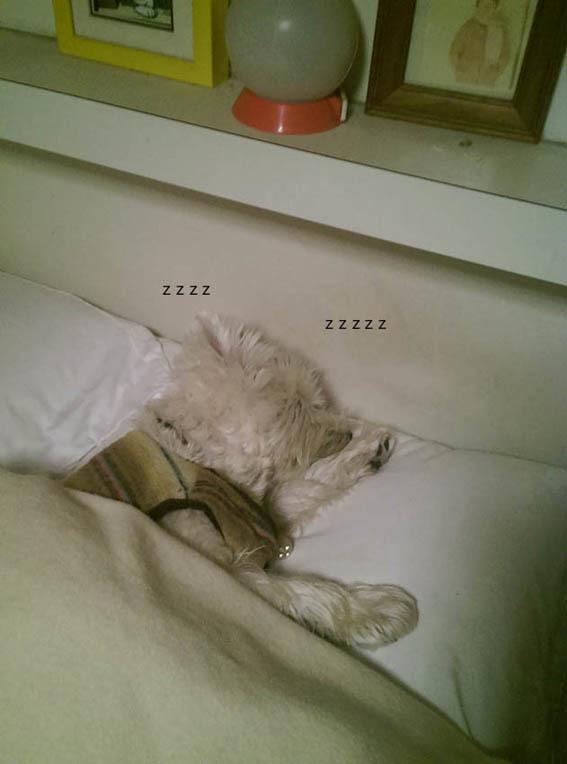 飼い主の枕はアミィの枕。_b0107163_01081454.jpg
