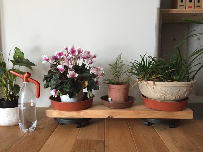 植物の台座は動くと便利_d0332870_17453092.jpg