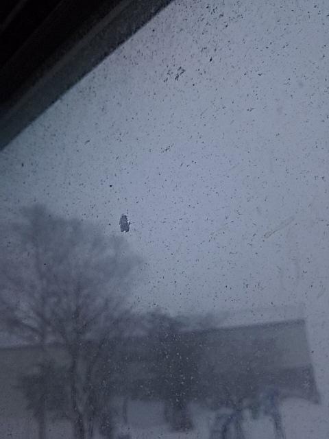 吹雪は、こもって、カレーだよ_f0316507_12595064.jpg