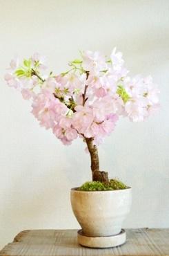 2~3月の盆栽ワークショップのご案内_d0263815_19252947.jpg