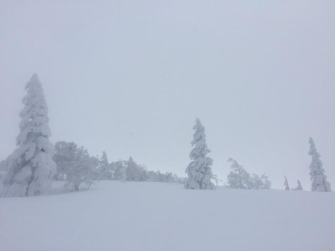 """2017年1月 『山の深雪』 January 2017 \""""Deep and Powder Snow\""""_c0219616_16292898.jpg"""