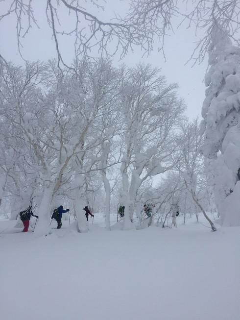 """2017年1月 『山の深雪』 January 2017 \""""Deep and Powder Snow\""""_c0219616_16295174.jpg"""
