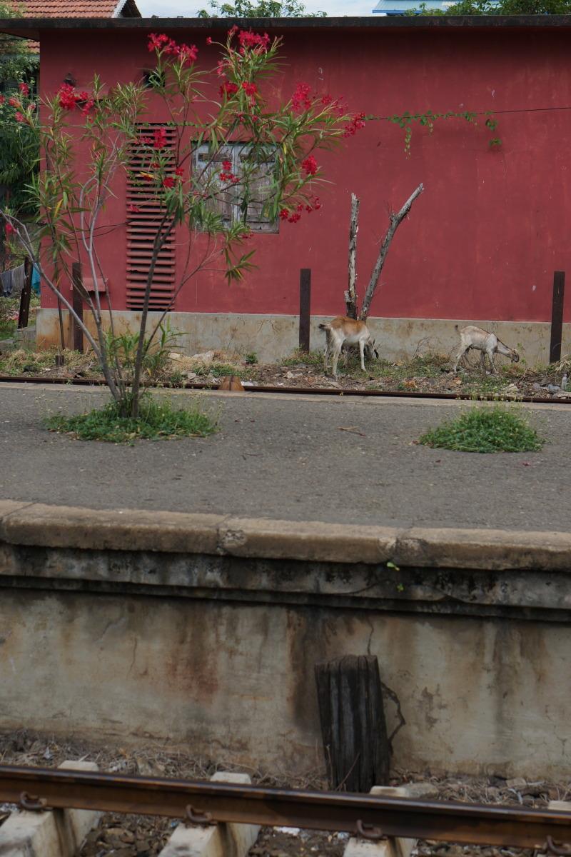 ネゴンボ  国鉄初乗り運賃は10ルピー約8円 _b0061717_23584484.jpg