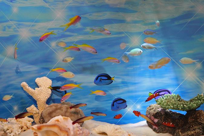 しながわ水族館:カクレクマノミとサンゴイソギンチャク_b0355317_20244949.jpg