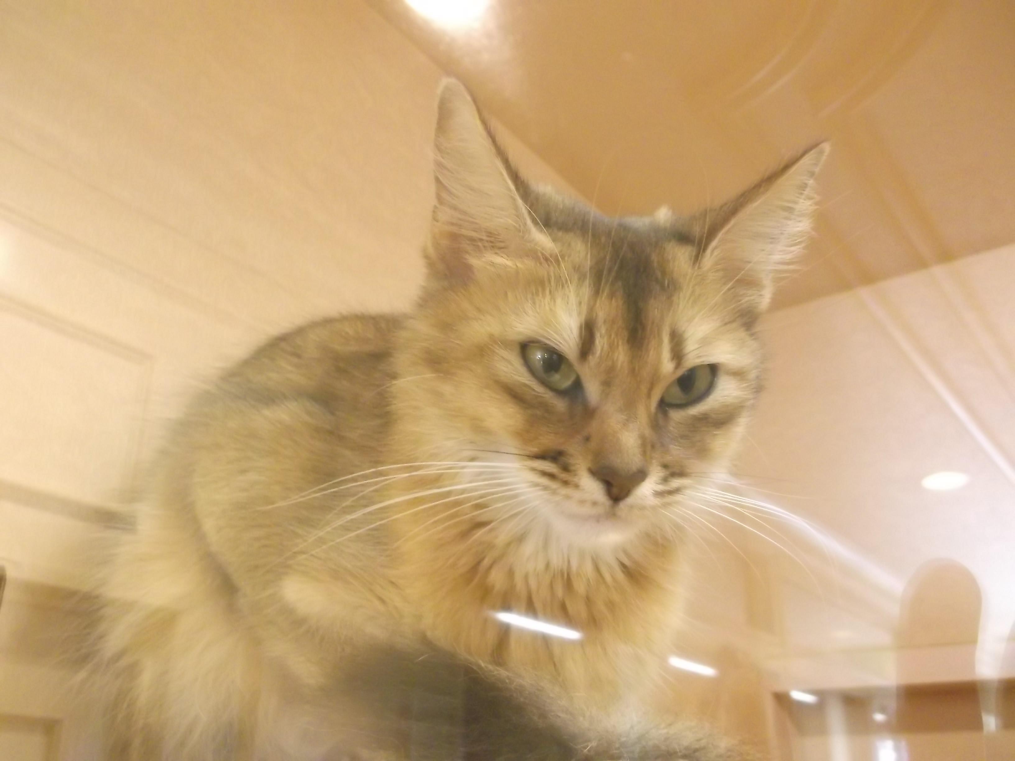 A・パーカー「バーディ」 : シェークスピアの猫