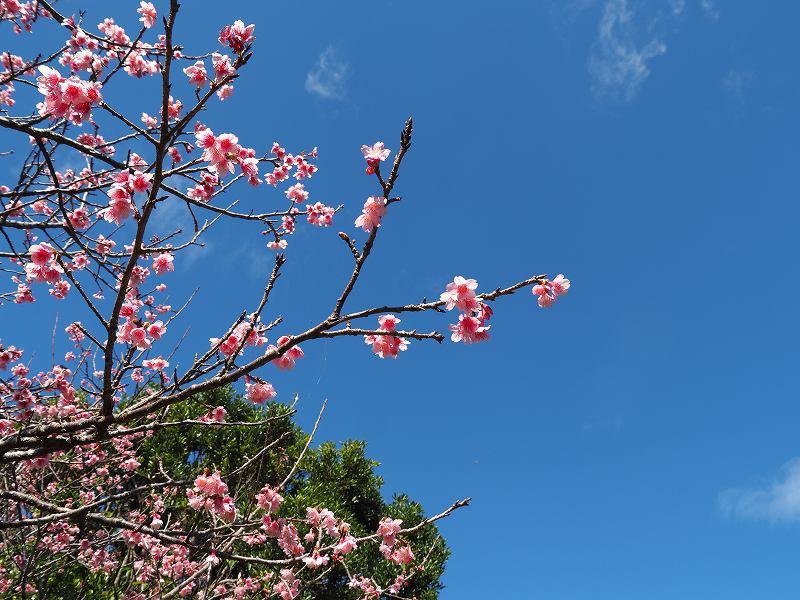 今年の桜が良い感じ♪_f0121321_12425897.jpg