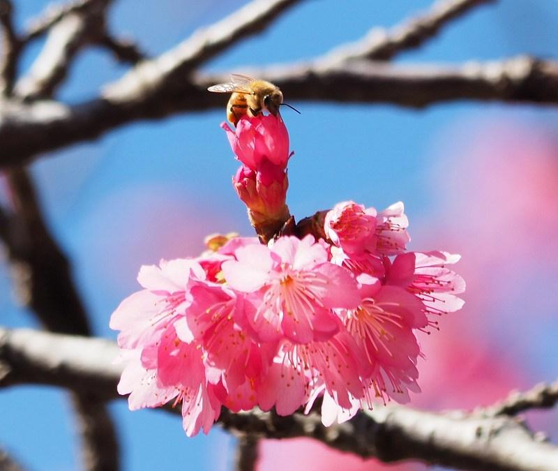 今年の桜が良い感じ♪_f0121321_12481880.jpg