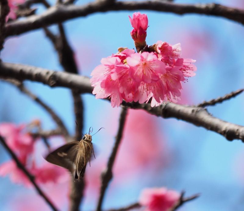 今年の桜が良い感じ♪_f0121321_12484369.jpg