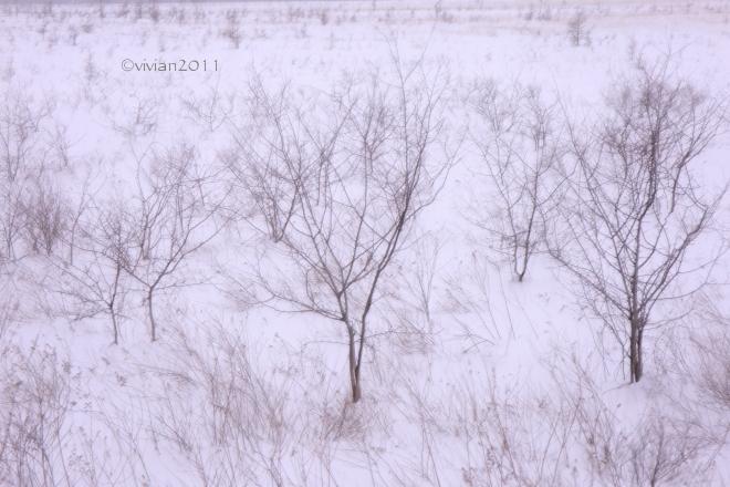 奥日光 特別撮影会 ~雪と氷の華厳の滝、中禅寺湖、竜頭の滝、湯ノ湖~_e0227942_21564388.jpg