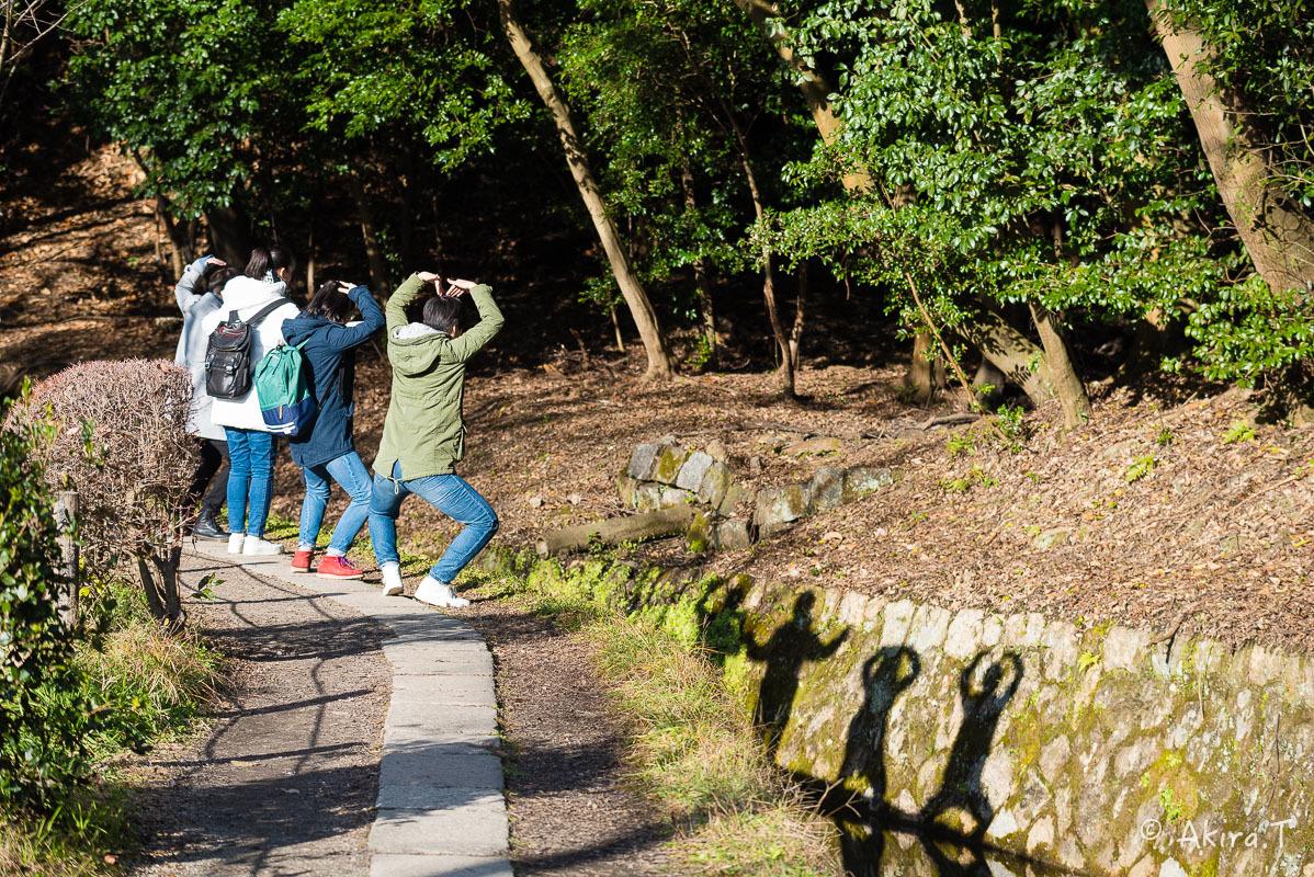 〜岩合光昭に挑戦〜 京都ネコ歩き -17-_f0152550_19515702.jpg