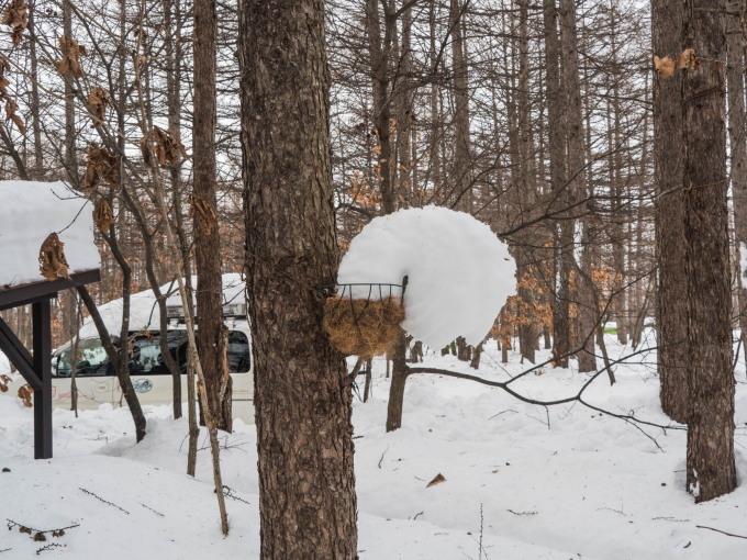 """カンタベリーの「雪まつり」?メイン雪像は""""りすのしっぽ""""?_f0276498_20373574.jpg"""