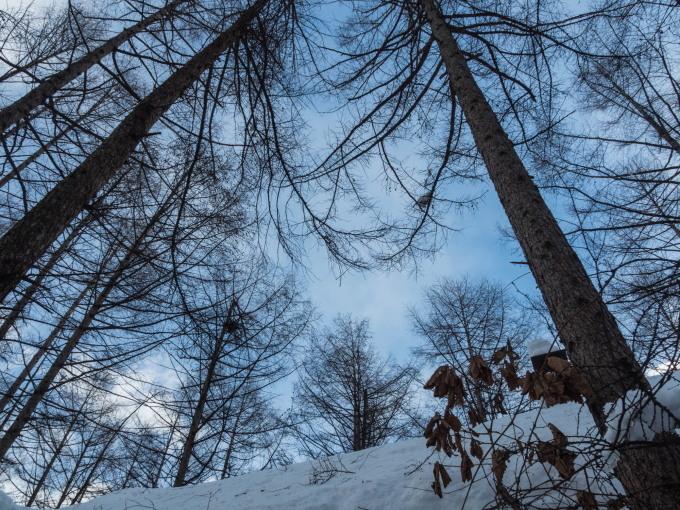 """カンタベリーの「雪まつり」?メイン雪像は""""りすのしっぽ""""?_f0276498_20393853.jpg"""