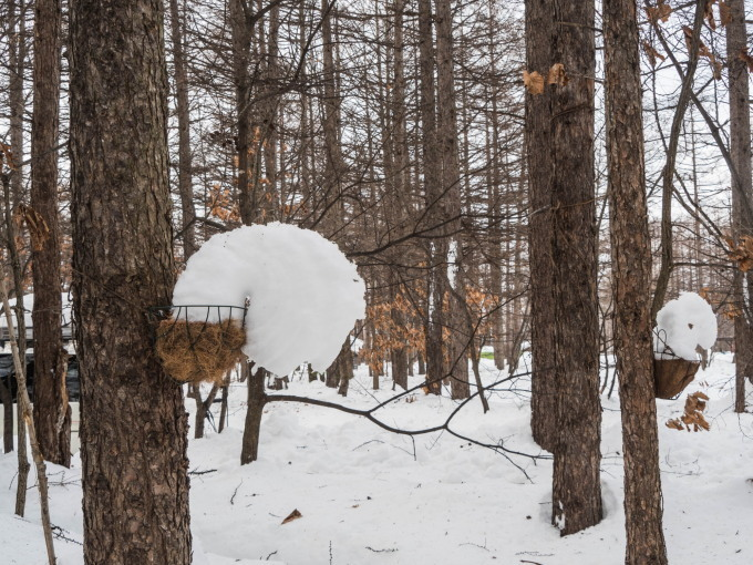 """カンタベリーの「雪まつり」?メイン雪像は""""りすのしっぽ""""?_f0276498_20401539.jpg"""