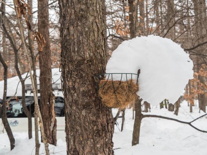 """カンタベリーの「雪まつり」?メイン雪像は""""りすのしっぽ""""?_f0276498_20405633.jpg"""